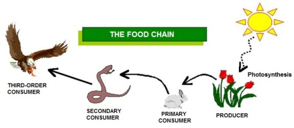 Powerpoint On The Dolphin S Food Chain
